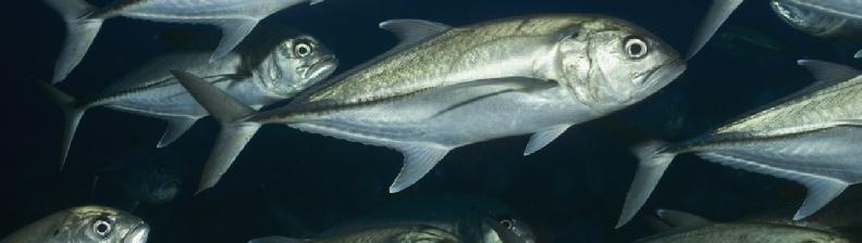 Cape Cod Fishing Report Tides
