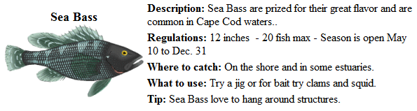 Game fish of cape cod ma for Ma saltwater fishing license