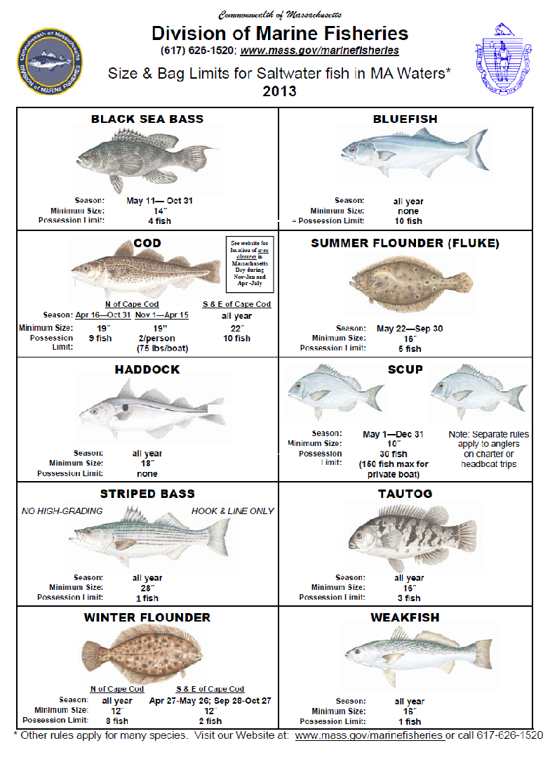Cape cod fishing regulations 2 for Fishing license requirements
